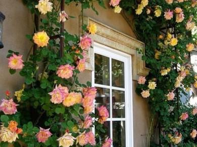 «Живая» цветущая стена создает приятную прохладу в жаркие дни