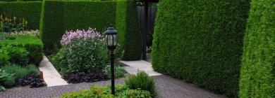 Живая изгородь в саду