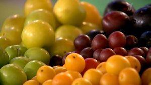 [:ua]Плоди аличі можуть мати найрізноманітніші забарвлення[:ru]Плоды алычи могут иметь самую различную окраску[:]