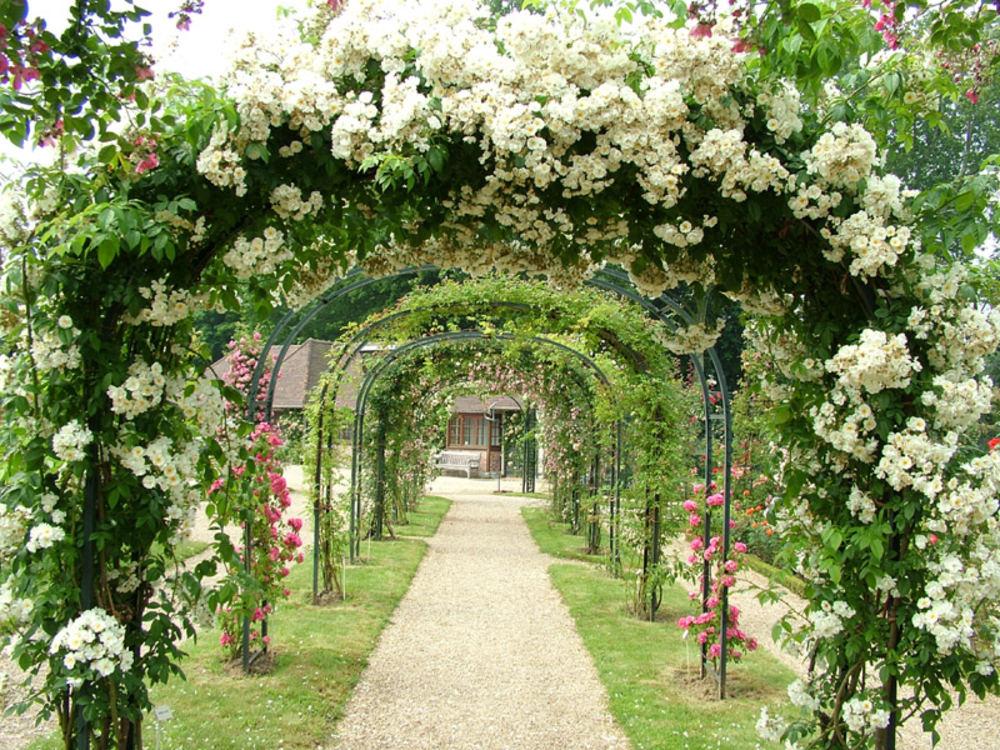 Вьющиеся растения – идеальный выбор для вертикального озеленения сада
