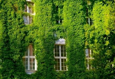 «Живая» стена многоэтажного дома