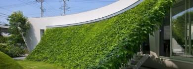 Зеленая виноградная терраса