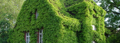 Декорирование фасада садового дома лианами