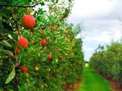 Общая информация о плодовых деревьях