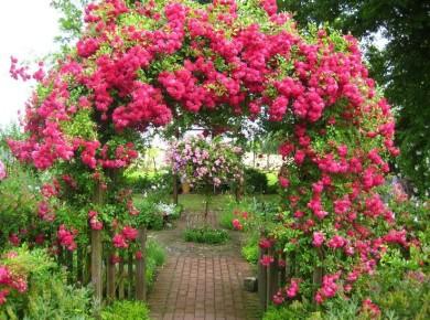 Ярка и изящная арка – волшебный вход в сад