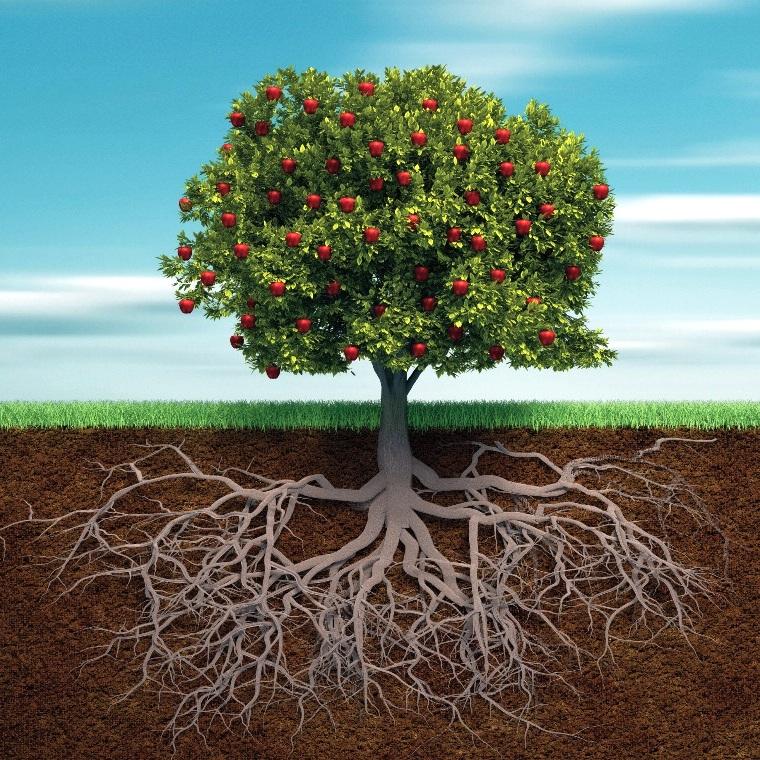Корневая система дерева может расти как вглубь земли, так и параллельно ее поверхности
